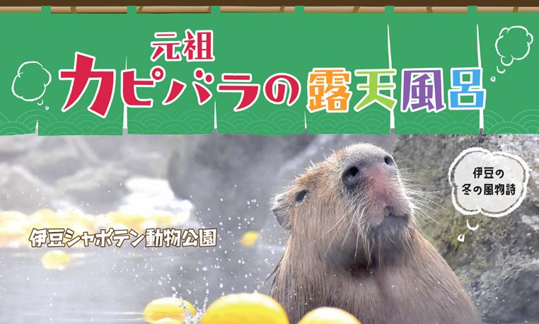 伊豆シャボテン動物公園 元祖カピバラの露天風呂